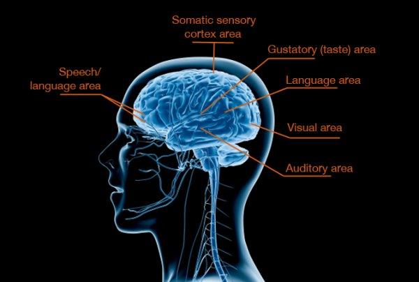 Hersenen SPD1